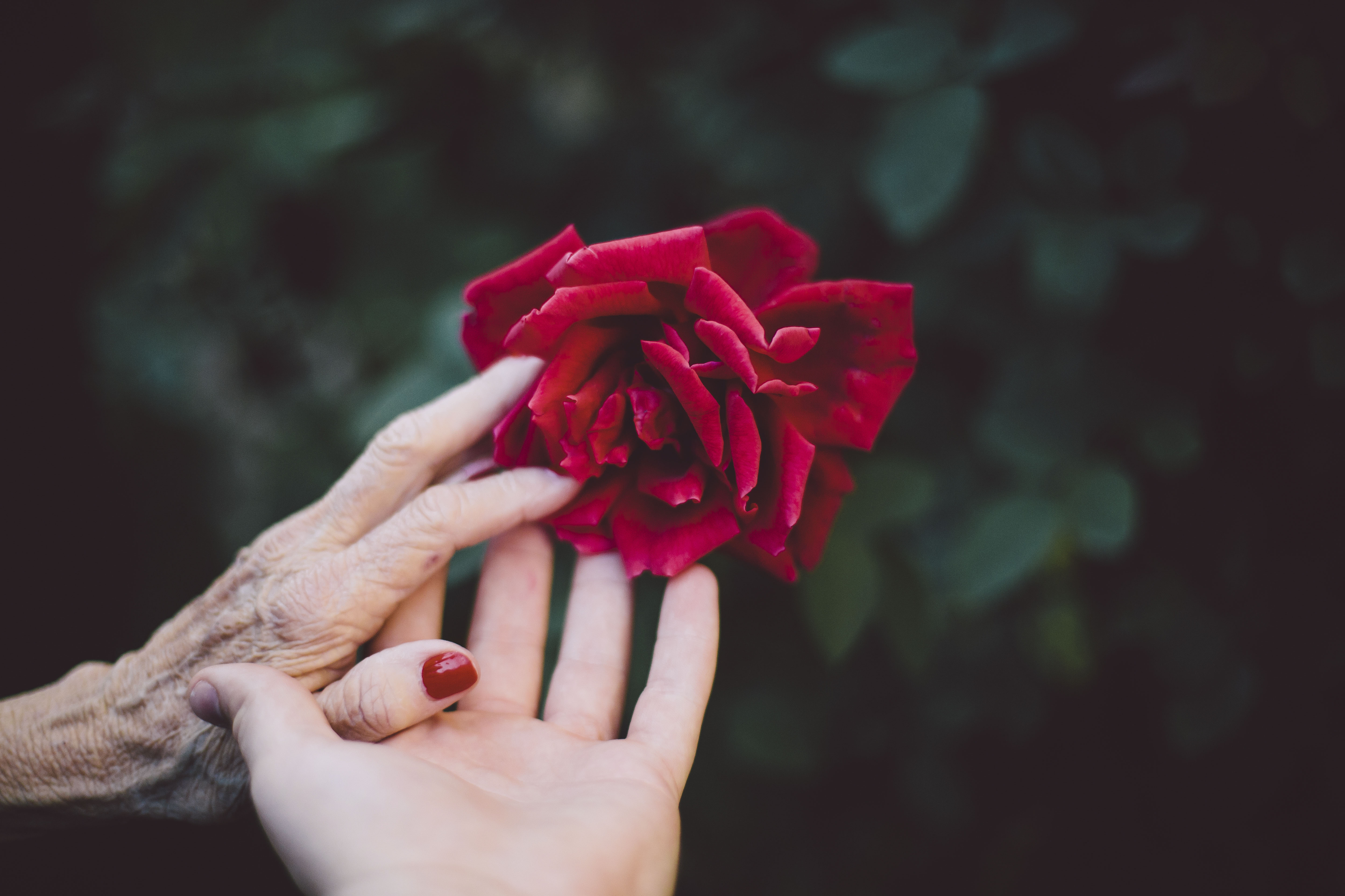 grief counseling, nina impala, tutoring for the spirit, tutoringforthespirit.com, grief counselor, intuitive guidance, intuitive sessions, guidance through grief, guidance through loss, elderly parents, guidance through death, suicide, loss of a loved one, loss of a parent, aging parents, moving towards death, terminal illness, divorce